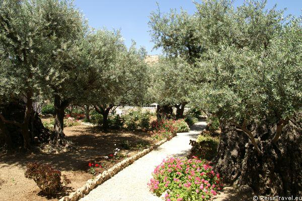 """Im """"Garten Gethsemani"""" wurde Jesus an Pontius Pilatus verraten"""